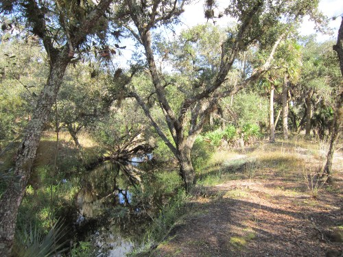 Hiking Along the Flowing Water, Three Lakes Wildlife Management Area