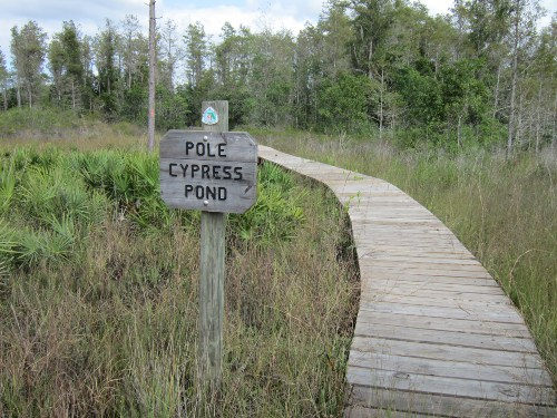 Pole Cypress Pond & Florida Trail, Three Lakes Wildlife Management Area