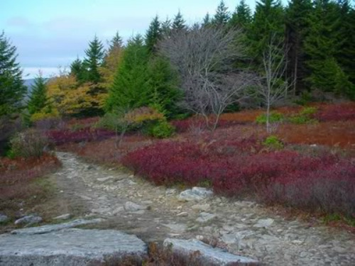 Blackbird Knob Trail, Dolly Sods Wilderness