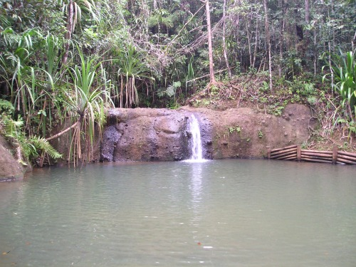 Colo-i-Suva Forest Reserve, backpacking fiji