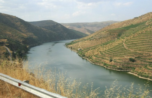 High Angle View of Vineyards Along a River, Douro Valley, Portugal, cheap backpacking