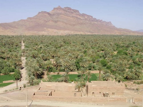 Date Palms in the Draa Valley, Morocco, cheap backpacking
