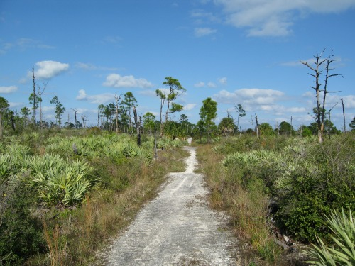 Eastern Return Trail, jonathan dickinson state park