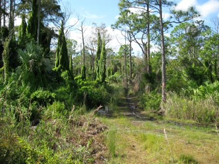 Exit Wetlands and Enter The Frying Pan!, jonathan dickinson state park