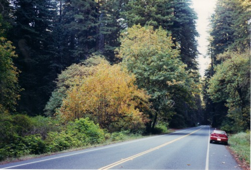 Fall Colors on Parkway, Redwoods National Park