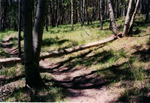 Fallen tree and lunch spot, colorado backpacking