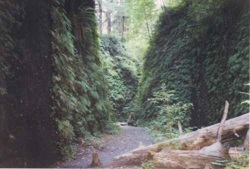 Fern Canyon, Redwoods National Park