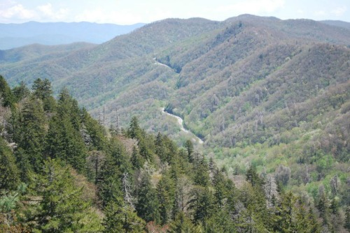Newfound Gap Road (U.S. Highway 441), appalachian trail tenn