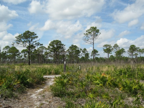 Nice Day For A Hike!, lake kissimmee state park