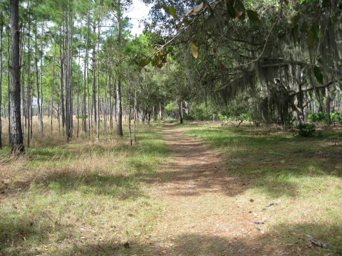 Side Trail to Loop, lake kissimmee state park