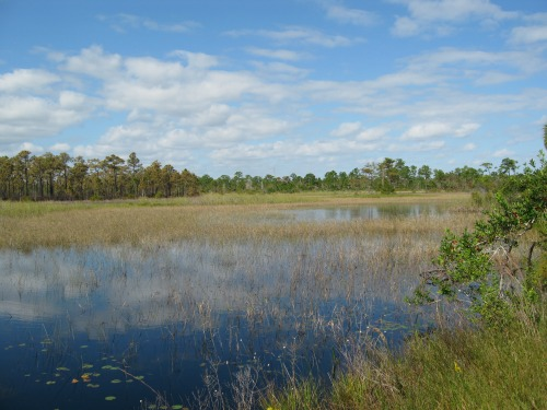 Wetlands, jonathan dickinson state park