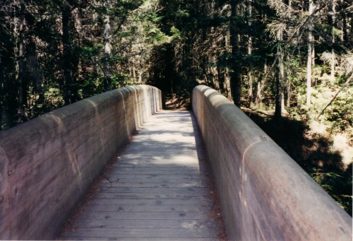 Wooden Bridge into Lady Bird Johnson Grove, Redwoods National Park
